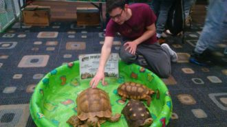 Antonio Nicosia pets tortoises as he participates in HERPS ALIVE!!